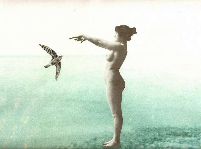 Sea bird - Mary Herrera X Jeanne Madic